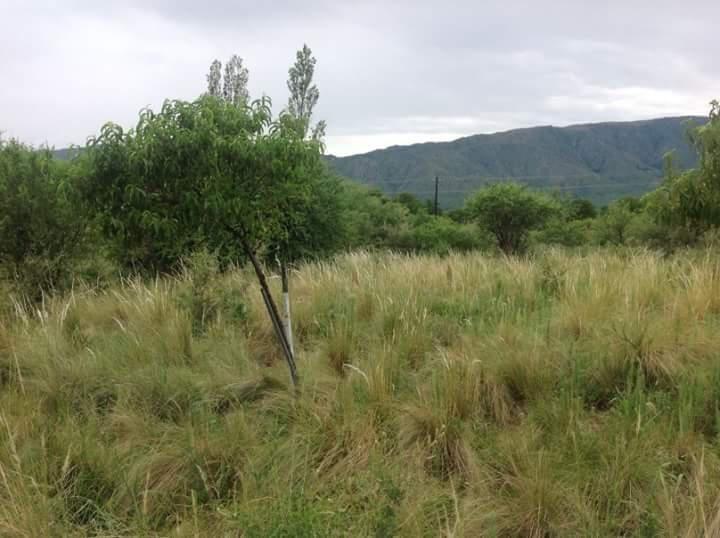 chacra 22 hectareas en san francisco del monte de oro casa de 160 metros
