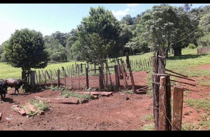 chacra 92 hectáreas en san vicente misiones