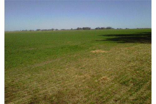 chacra campo de 22 hectareas en saladillo