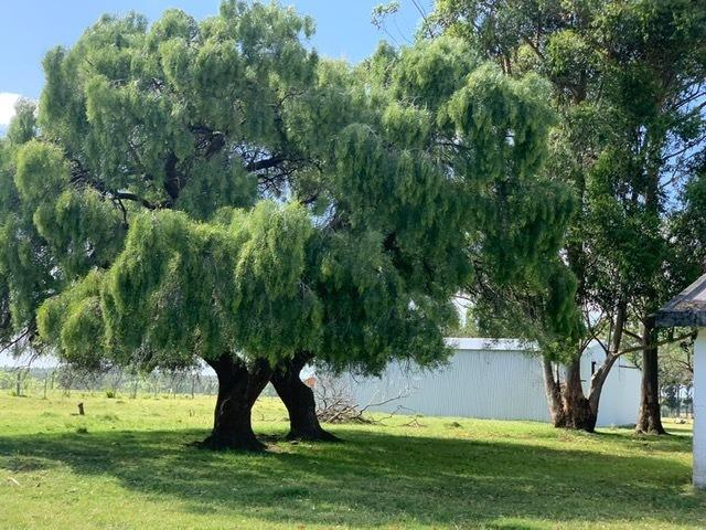 chacra  con tajamar/monte eucaliptus/2 galpones