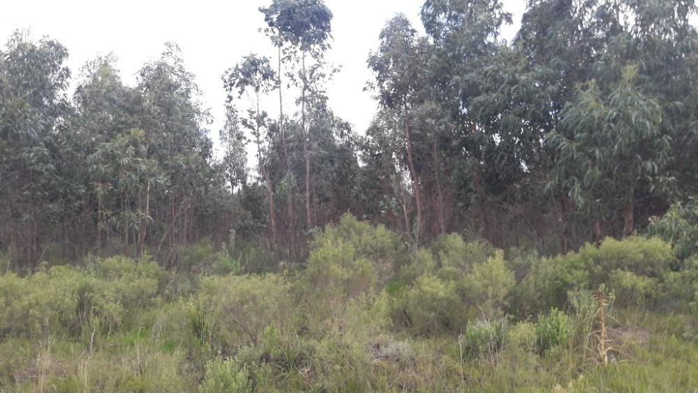 chacra de 2 hectáreas en canelones