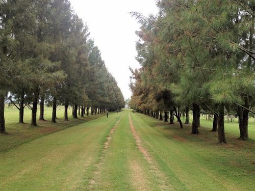 chacra de 47 hectareas en magdalena - rp 20 km 32