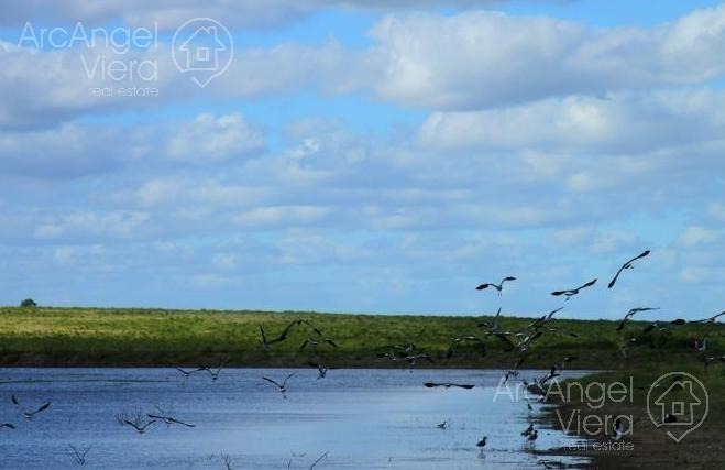 chacra de 5 hectareas en venta en punta ballena - laguna del sauce
