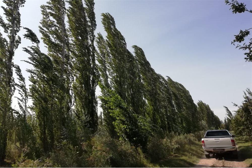 chacra de 7 ha en producción  villa manzano