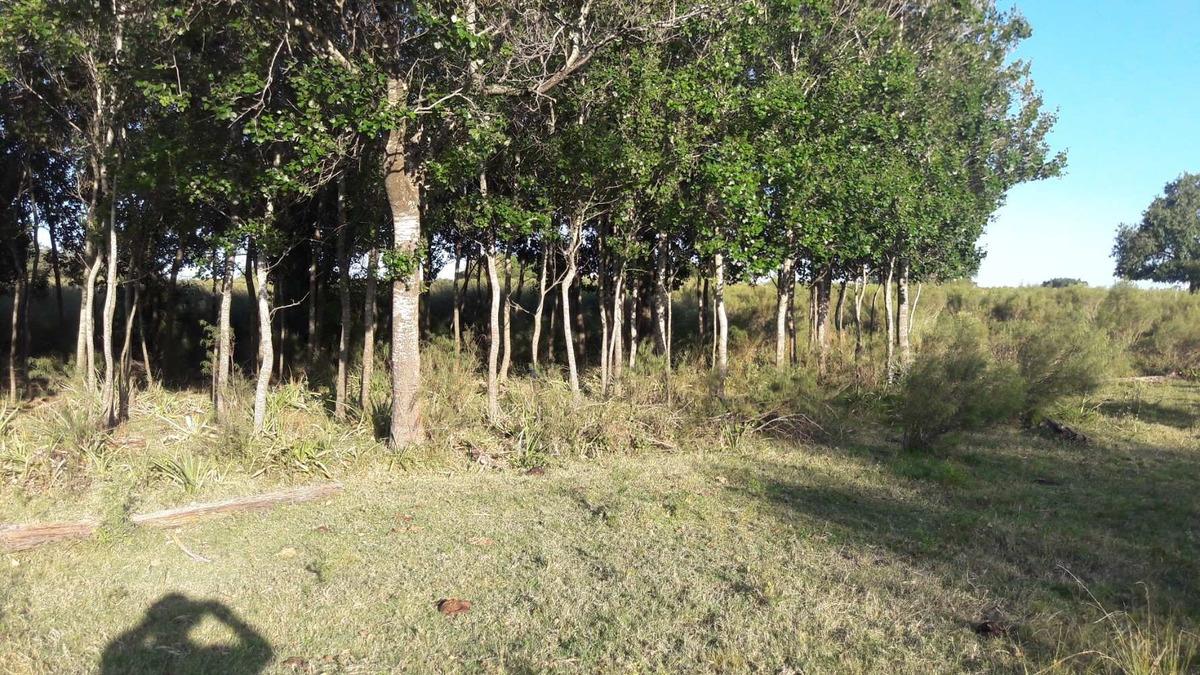 chacra de 7 hectáreas reservada
