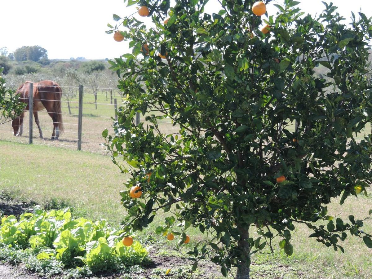 chacra en colonia, con plantaciones de frutales y olivos