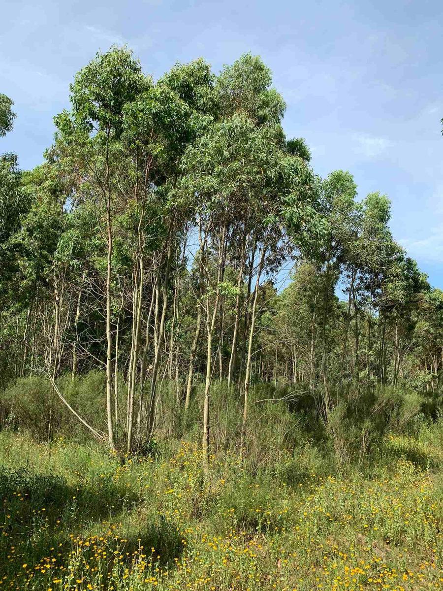 chacra en el pinar 10 hectáreas