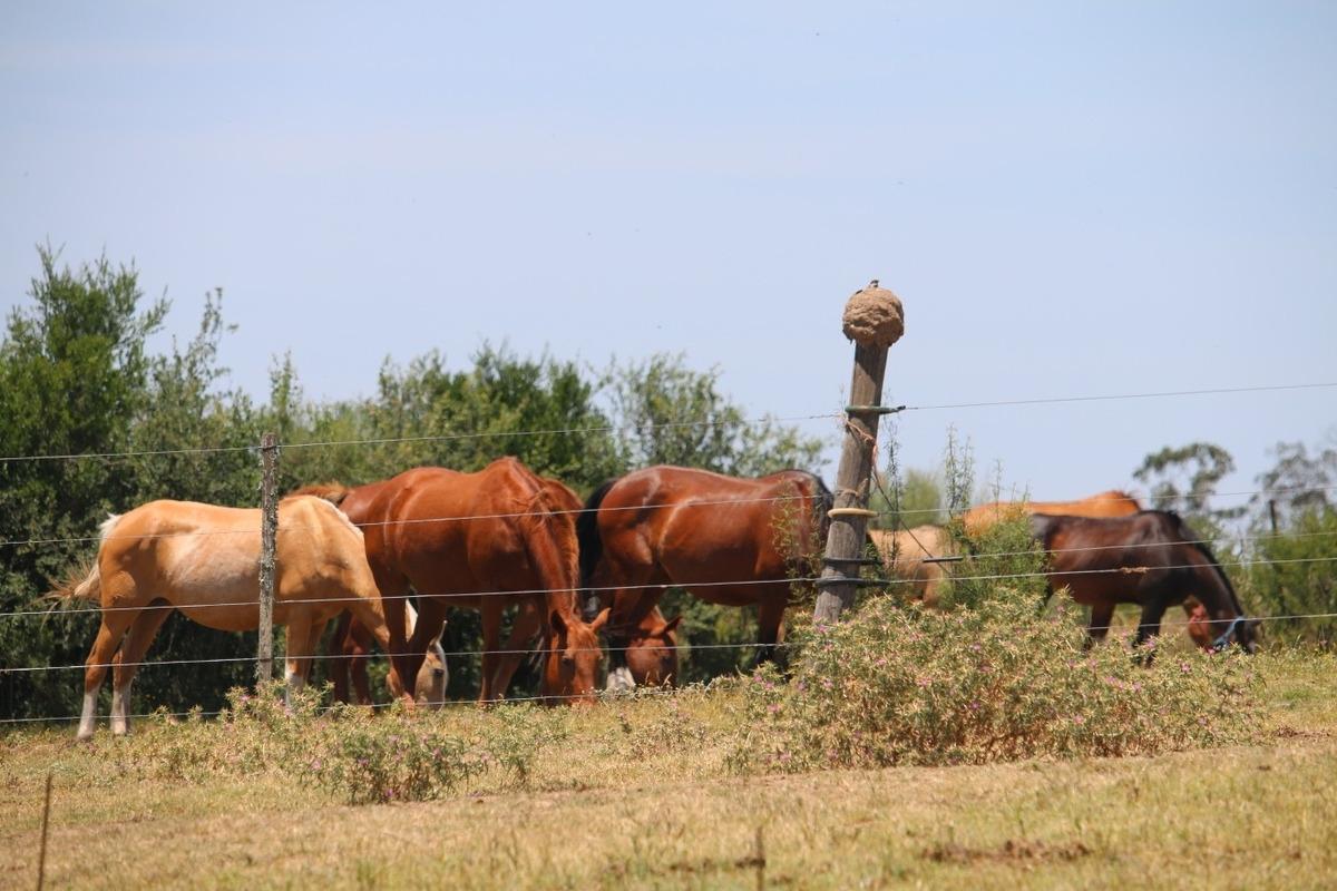 chacra en melilla (mvd rural)