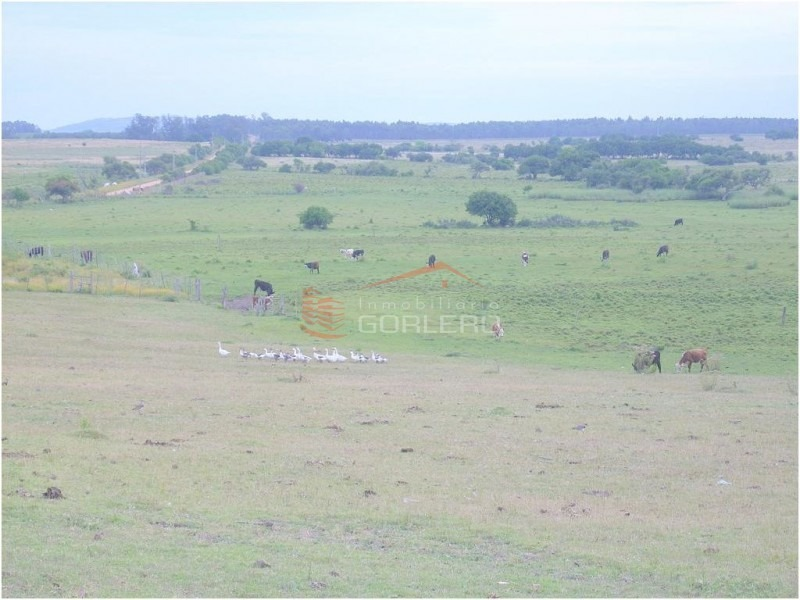 chacra en uruguay, punta del este a sólo 24 km- ref: 20634