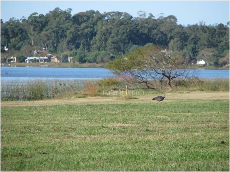chacra en uruguay, punta del este, laguna de los cisnes-ref:20845