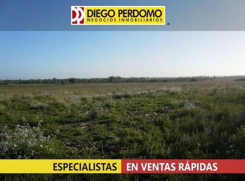 chacra productiva 10.8 ha,san josé- uruguay