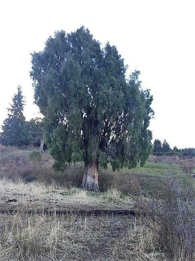 chacra - trevelin