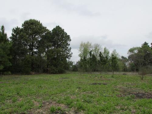 chacra/lote 8.500 m² los cardales forestado a 800 mts. ruta
