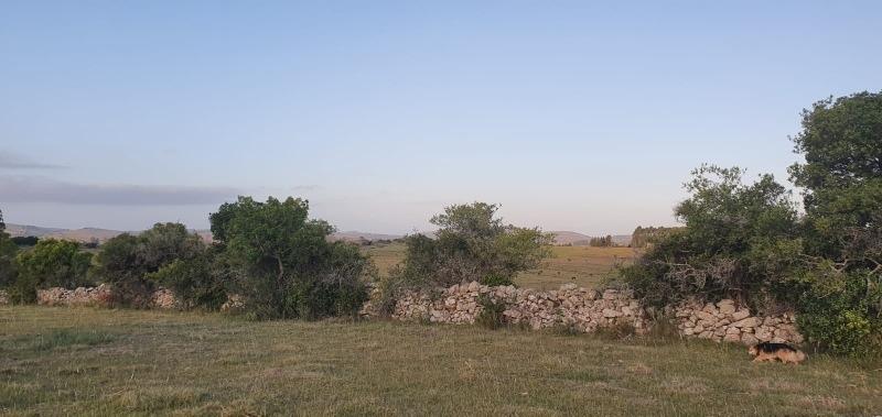 chacras de 5 hectareas pueblo eden ruta 12 punta del este