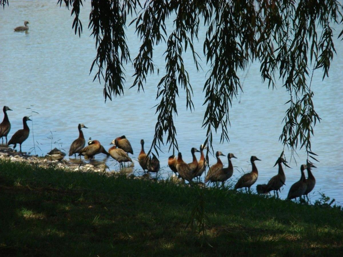 chacras de la reserva en río luján