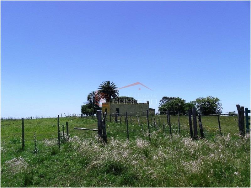 chacras en uruguay, punta del este- ref: 20928