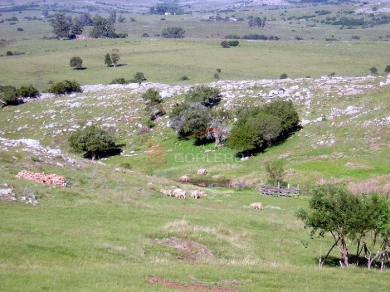 chacras en uruguay, punta del este, ruta 12 -ref:20670