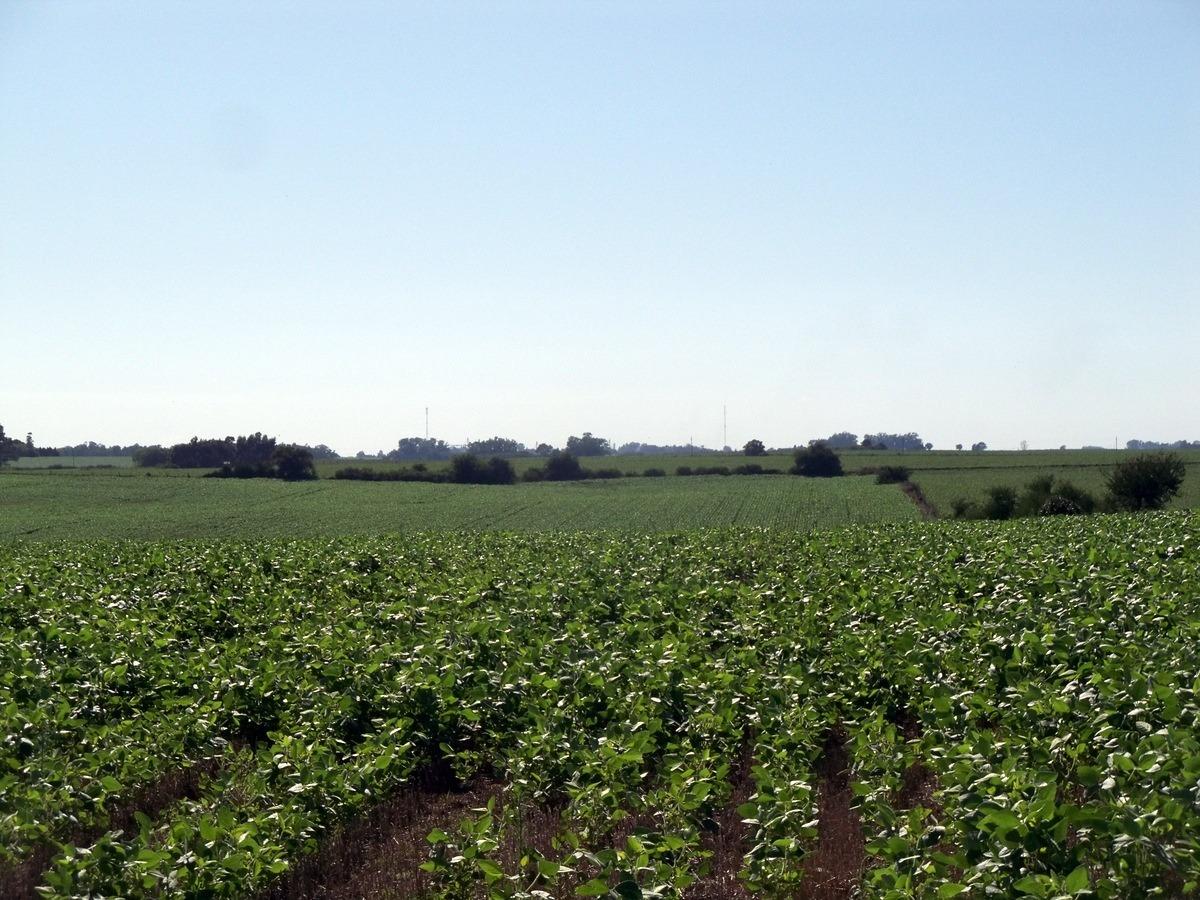 chacras venta 23,7 has agrícolas dpto. de soriano agraciada