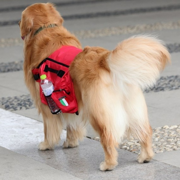 arnes perro mochila