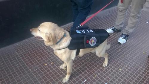 chaleco táctico para perros con sistema molle