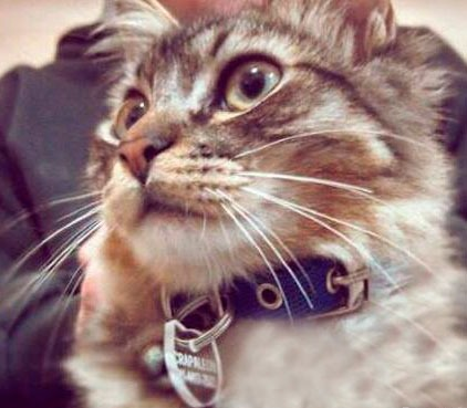 Mascotas - Página 3 Chapitas-identificatorias-para-mascotas-medallas-perro-gato-D_NQ_NP_6162-MLA4631039143_072013-F