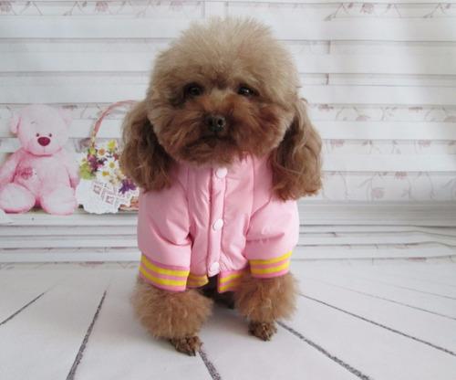 chaqueta para mascota perro / gato impermeable  s,