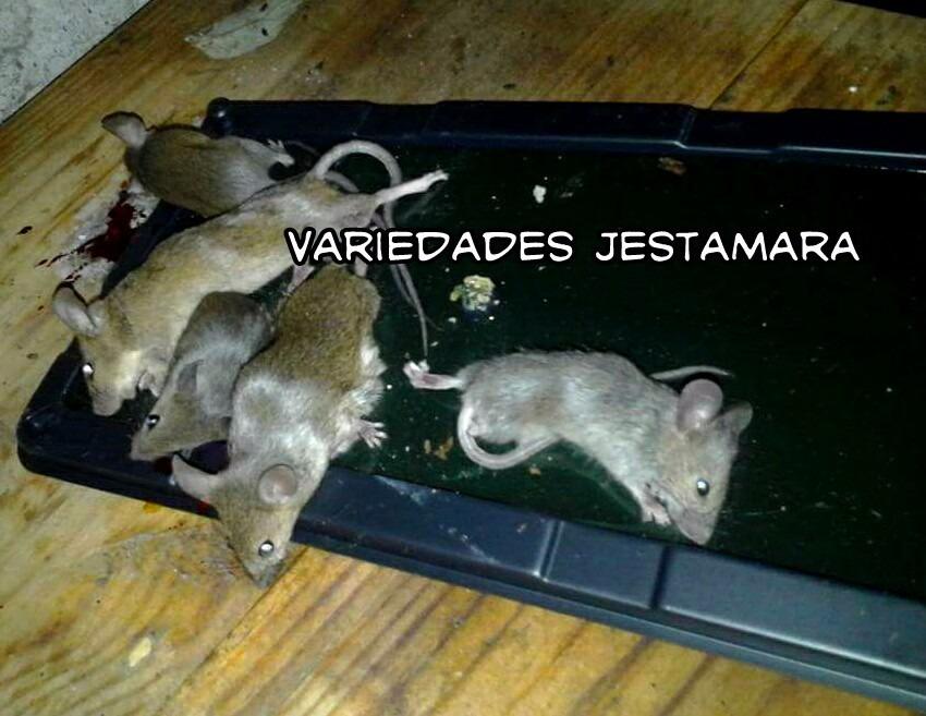 Charolas De Pegamento Atrapa Ratas Y Ratones - $ 55.00 en