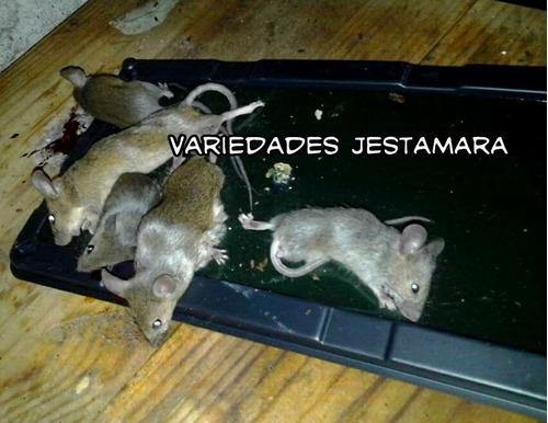 Como atrapar ratones gallery of gatovolador latest cmo hacer una trampa para ratones casera - Como cazar un raton en un piso ...