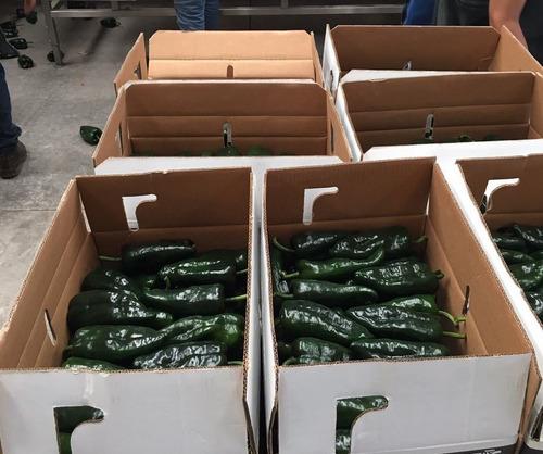 chile anaheim calidad exportacion