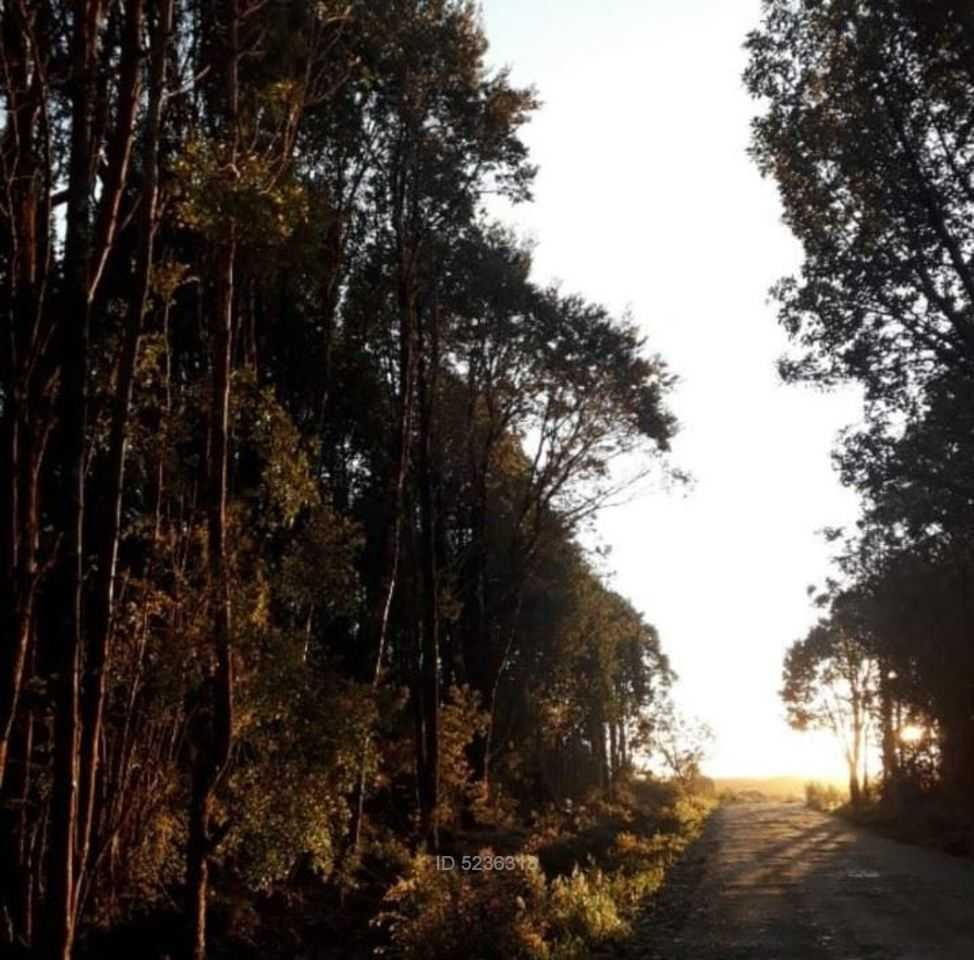 chiloé, ancud