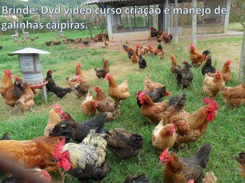 chocadeira pantanal 100 ovos automatica, digital, forçada ar
