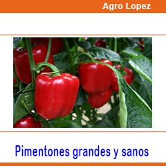 cinta riego por goteo melon tomate pimenton cebolla aji yuca