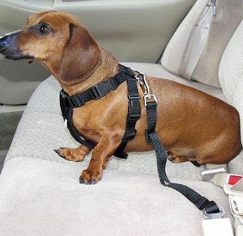 cinturon de seguridad para mascotas perros y gatos