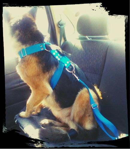 cinturón de seguridad para mascotas reglamentario por mayor