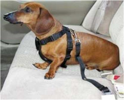 cinturon de seguridad para perros, correa negras y rosadas