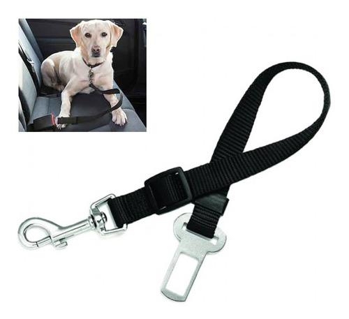 cinturón de seguridad perros y gatos en el auto pethome