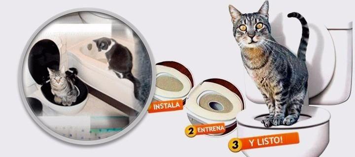 Baño Gatos   City Kitty Bano Para Gatos Entrena A Tu Gato A Ir Al Bano