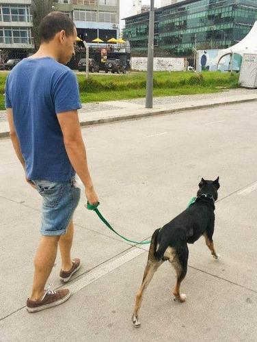 clases de adiestramiento canino a domicilio