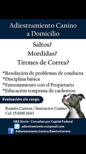 clases de adiestramiento canino profesional a domicilio