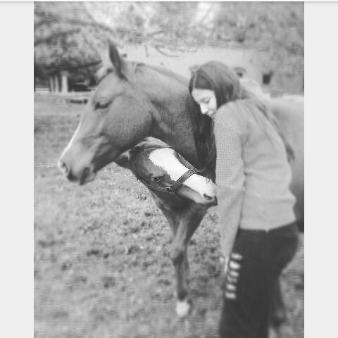 clases de equitación, pensionado equino descanso de caballos