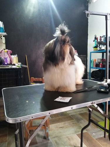 clases de estilismo canino profesional