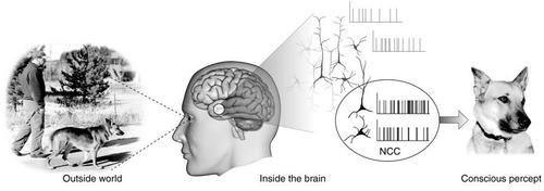 clases de inglés con técnica neurolinguistica pnl *oferta*