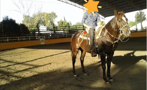 clases de montar caballos