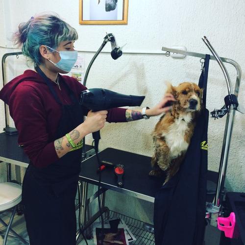 clases de peluquería canina