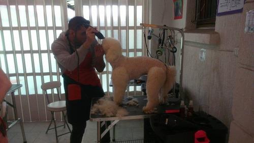 clases de peluquería canina comercial