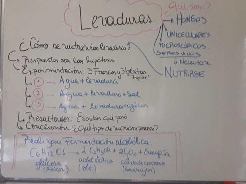 clases particulares ciencias naturales, física y biologia