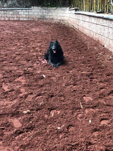 clases particulares de entrenamiento para tu perro