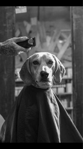 clases particulares de estética canina y felina.