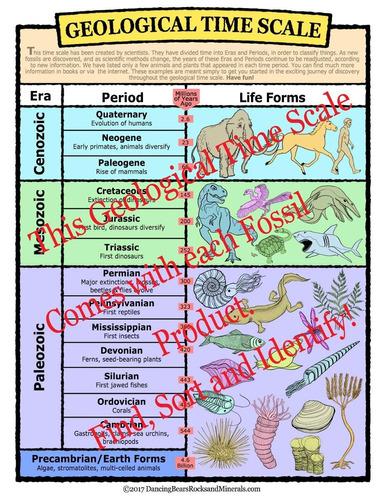 clasificación de fósiles actividad kit de recogida (más de 1