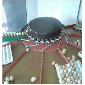 Clasificadora Para Huevos. Maquinaria Industrial.